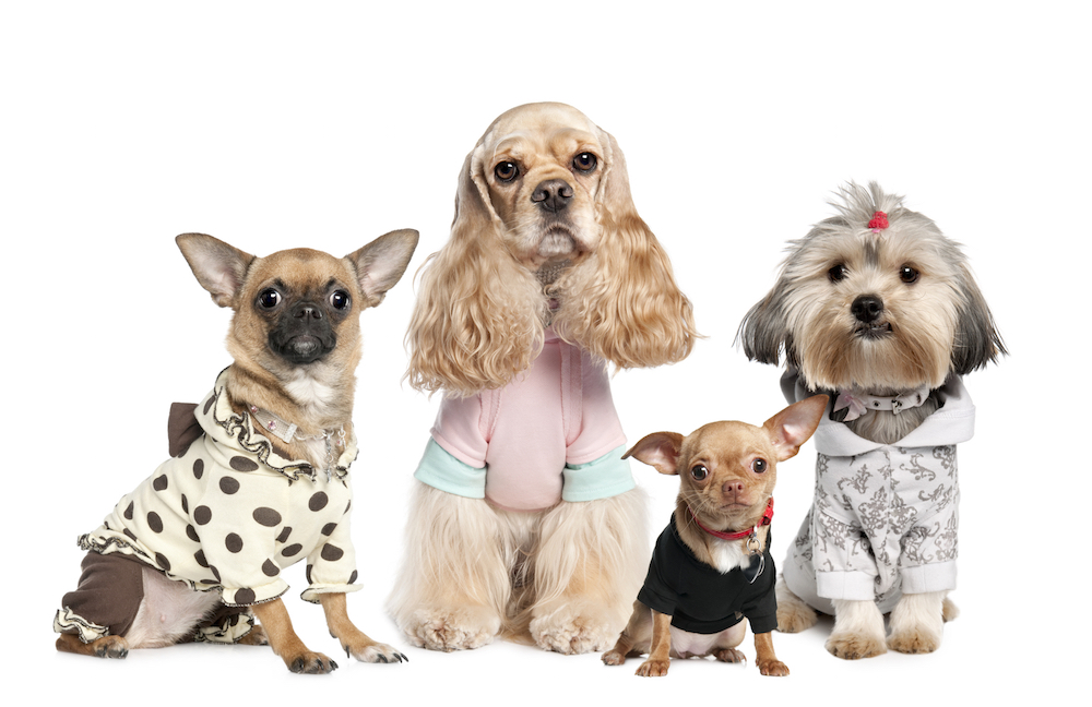 dog fashion and stories for dog parents