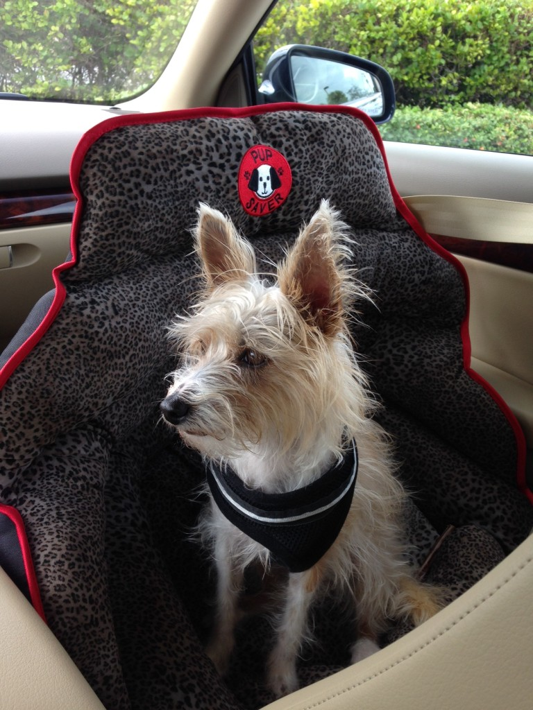 Best Dog Car Seat >> Gift Idea My Best Dog Car Seat Pupsaver Unveils New Luxe Fabric