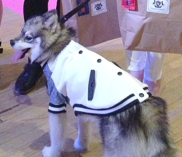 FIT Dog Fashion Show winning designers on Bark and Swagger