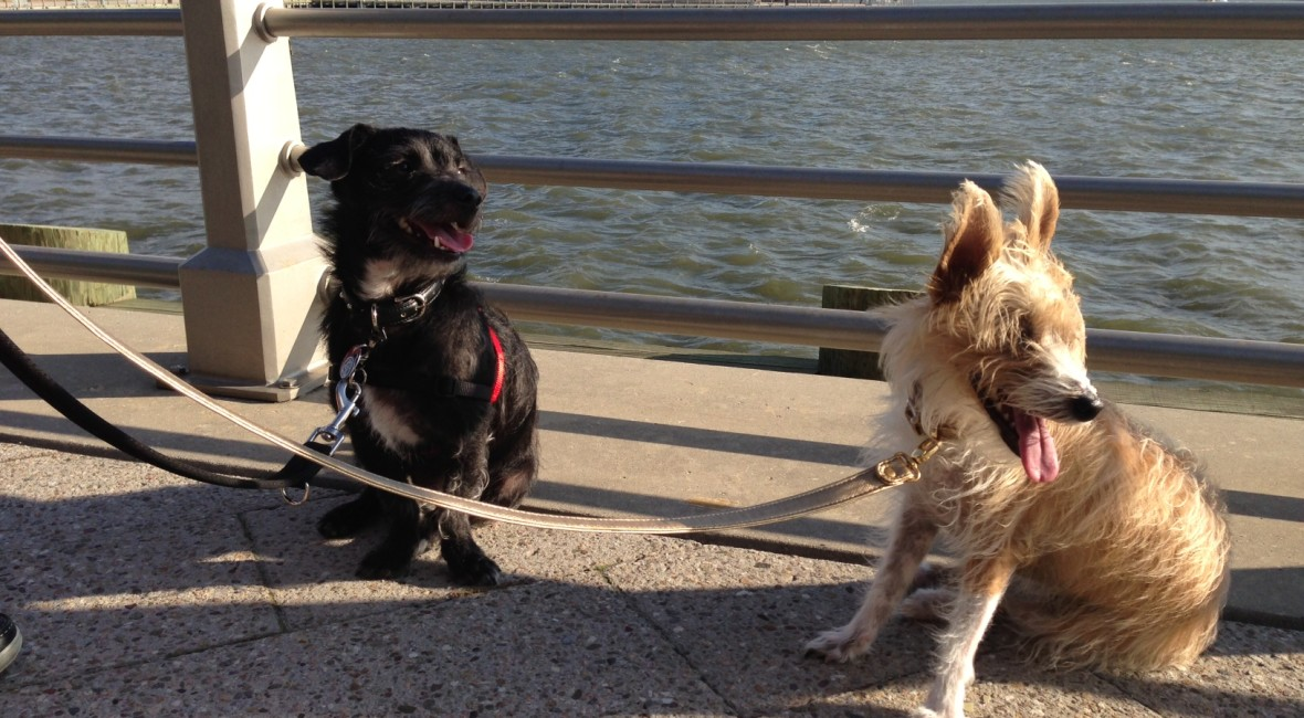 Cool things to do with your dog in NYC on BarkandSwagger.com