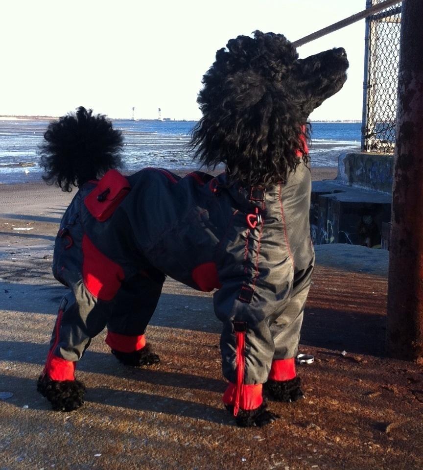 Stylish, full coverage dog coats on Bark and Swagger