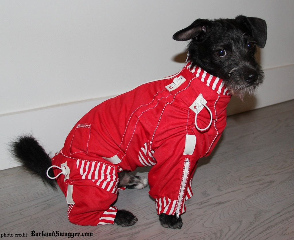 stylish full coverage body coats for dogs on Bark and Swagger