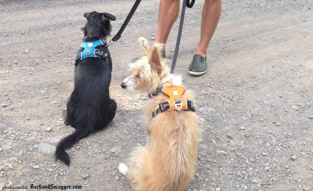 Why I My Dog Harness: A Review - Bark and Swagger