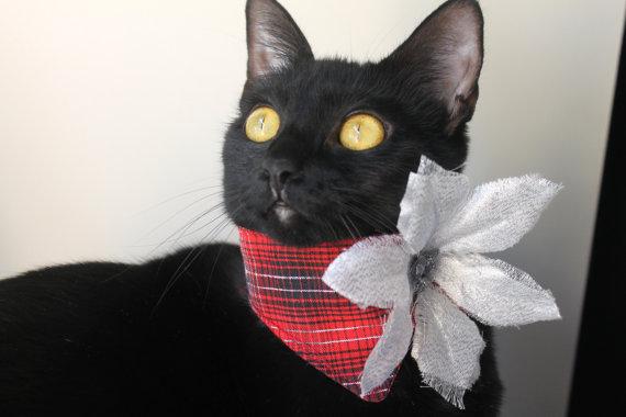 IAPFP December 14-Holiday Attire-Gatinela cat poinsetta
