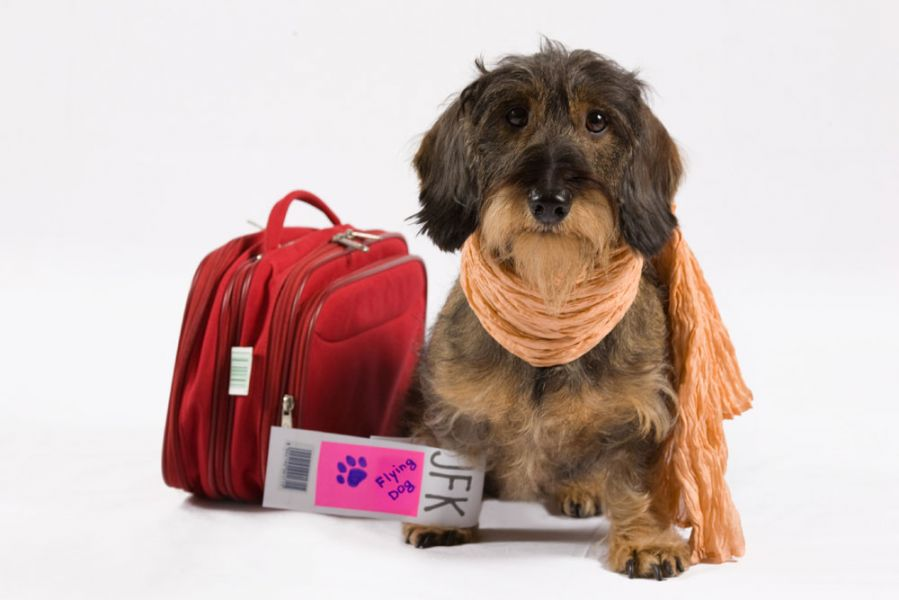 My Best Fashionable Travel Bags For Dogs On Www Barkandswagger