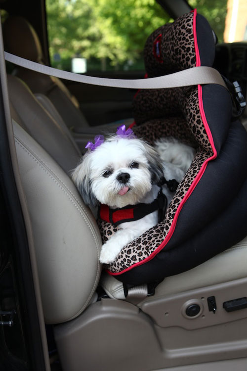 The only officially crash-tested, rear-facing car seat for small dogs. The Pupsaver .