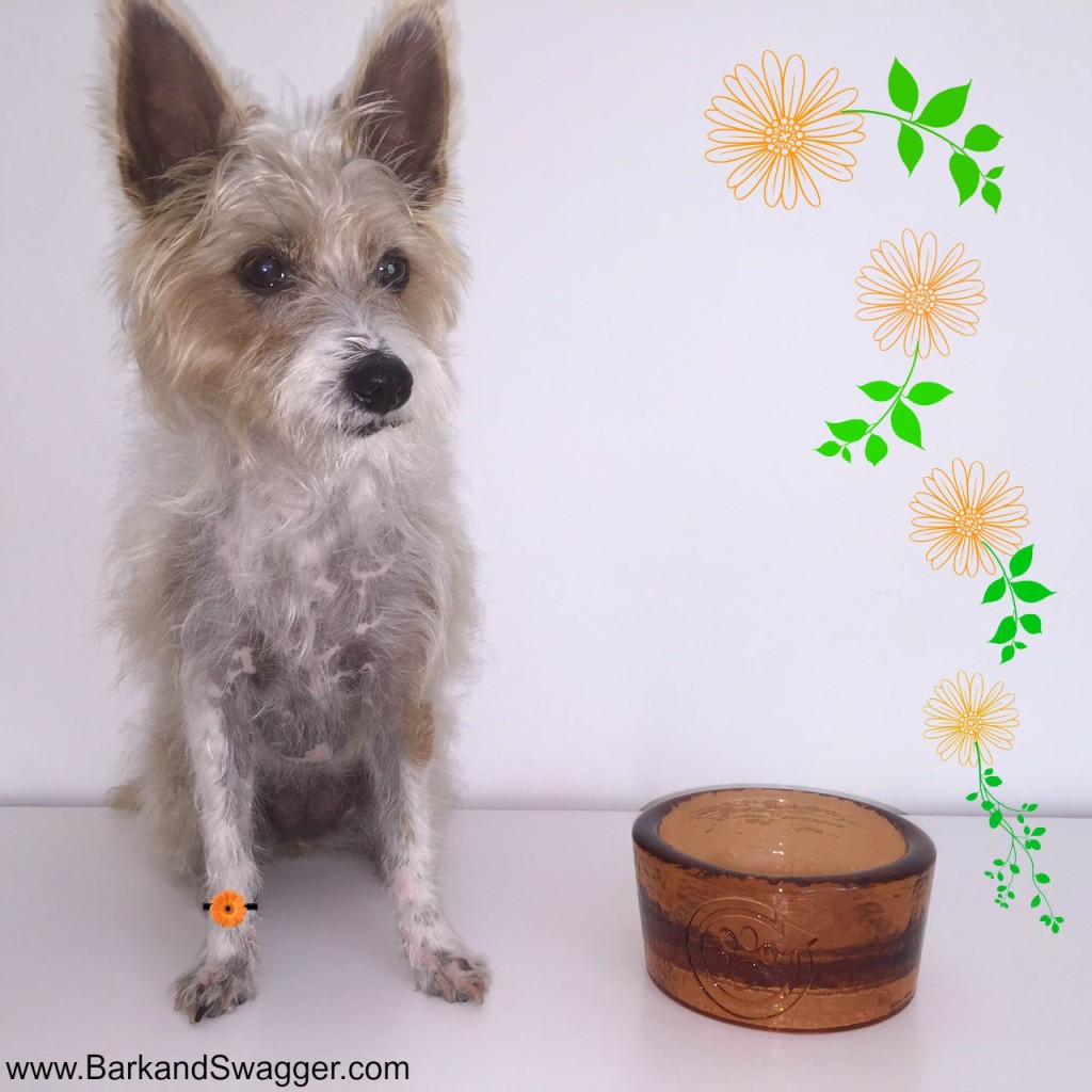 Beautiful recycled glass dog bowls from PawNosh