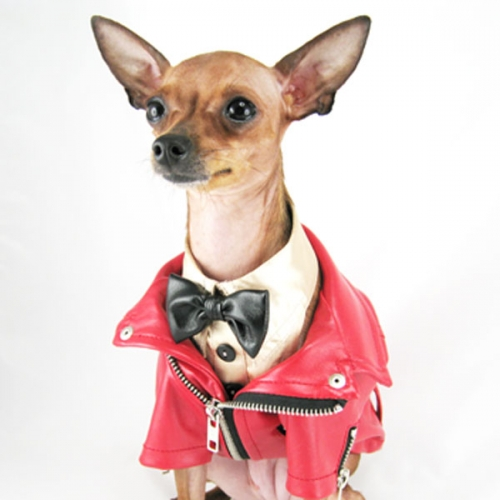 back to school fashion tips for dogs