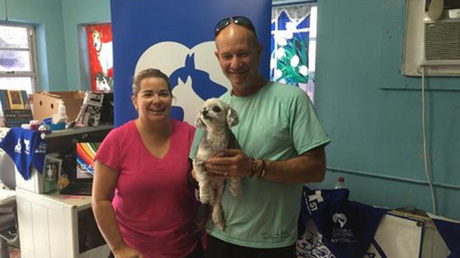 Clear the Shelters a huge success in getting shelter animals adopted