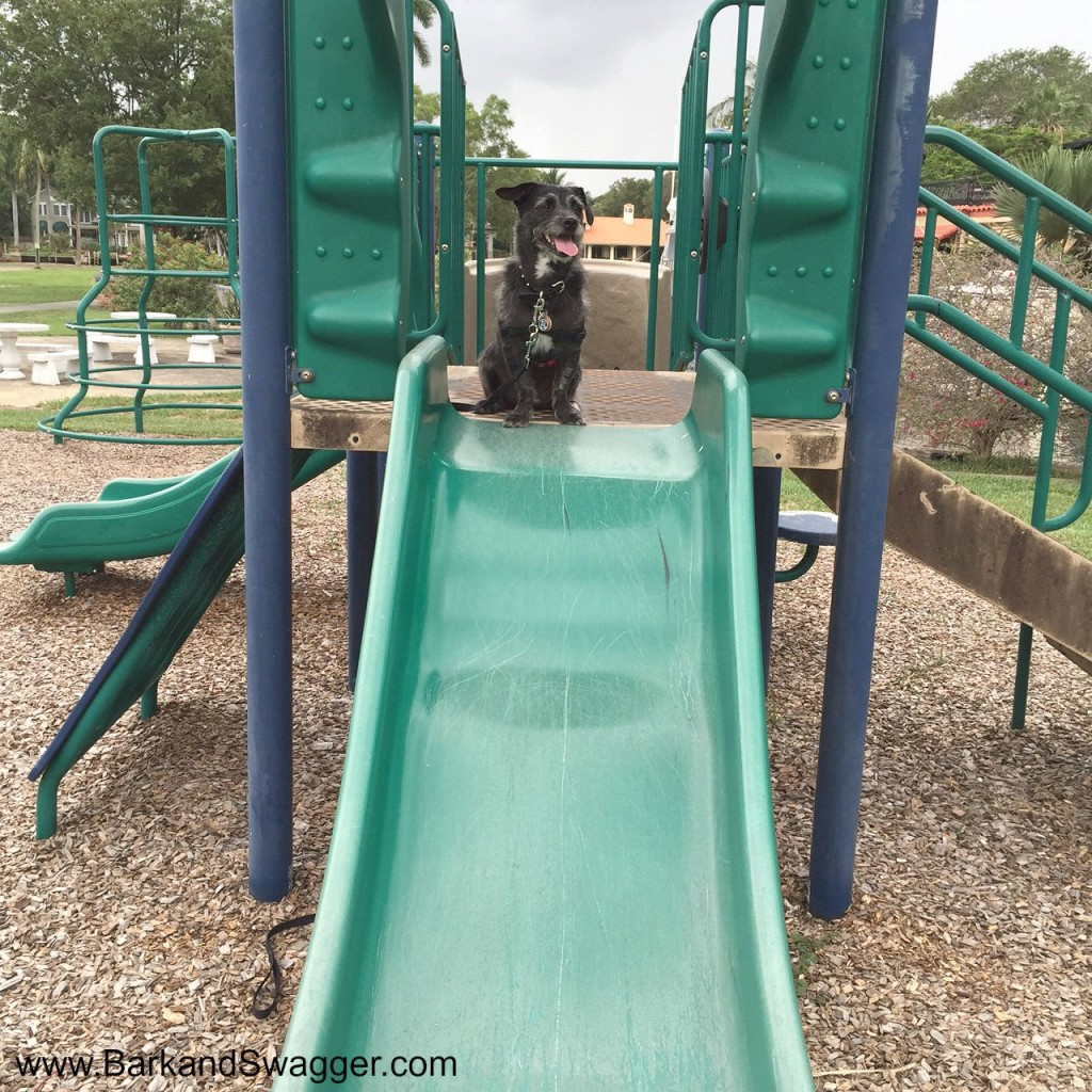 52 Snapshots of Life photo challenge is all about school, so here's Jasper on the playground slide