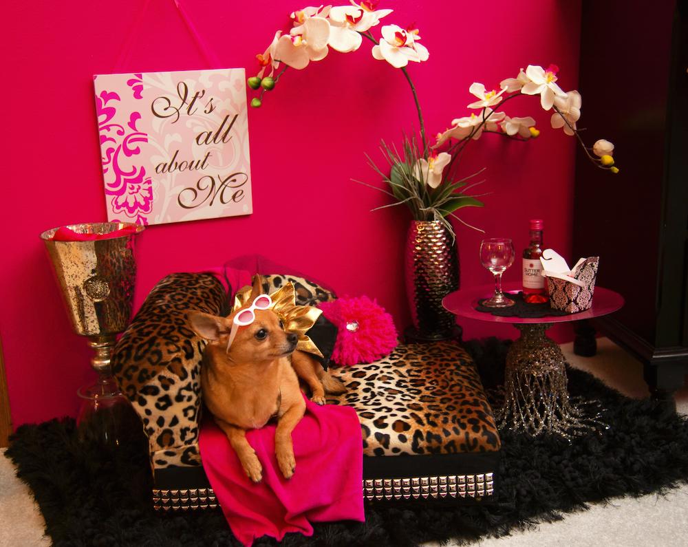 Meet Gigi, the dog fashion model & Service Dog