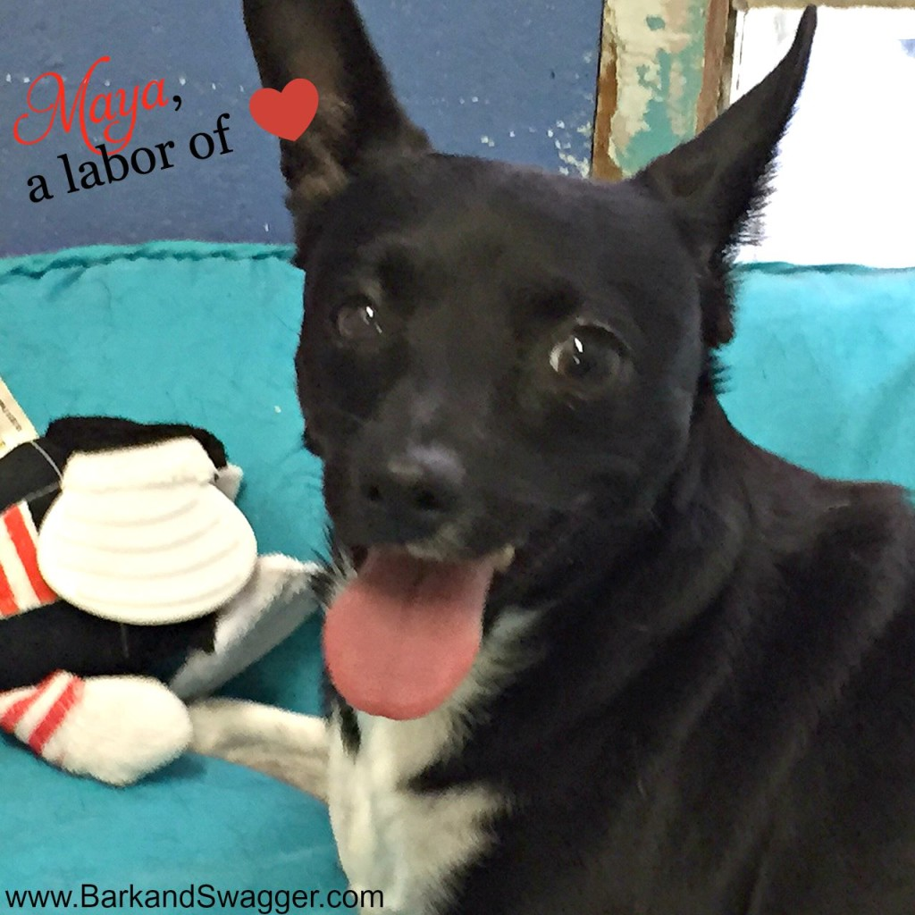 Adopt a Fort Lauderdale shelter dog