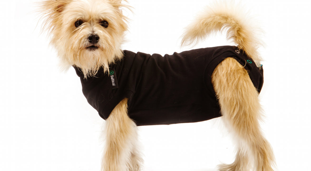 how to stop your dog from biting itself. A shelter dog uses the Suitical Recovery Suit. Lots of uses for this suit.