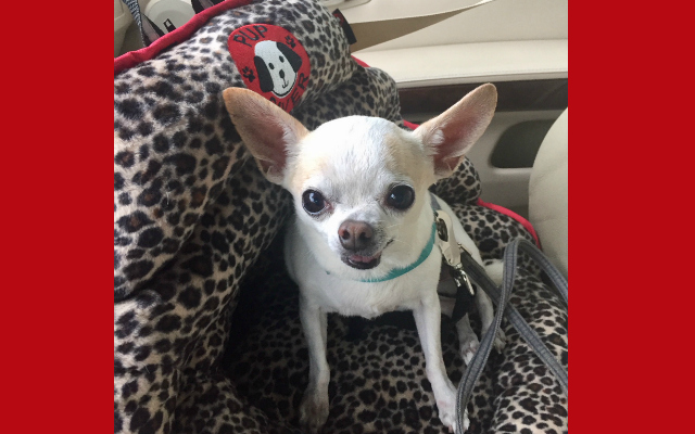 Revolutionary Car Seat for Dogs Now in Petite!