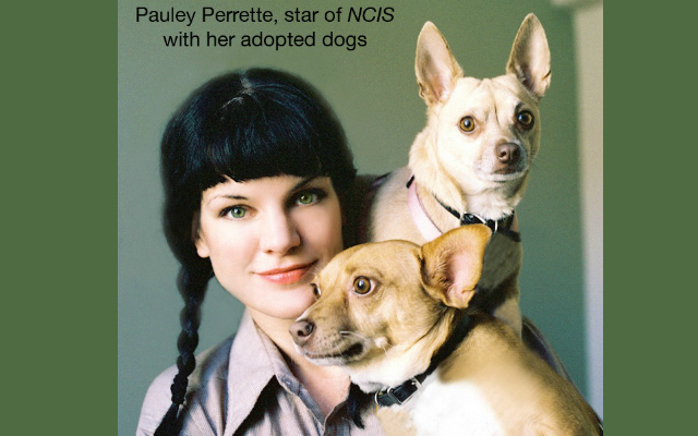 NEW SHOW: How Rescue Pets Saved These Celebs